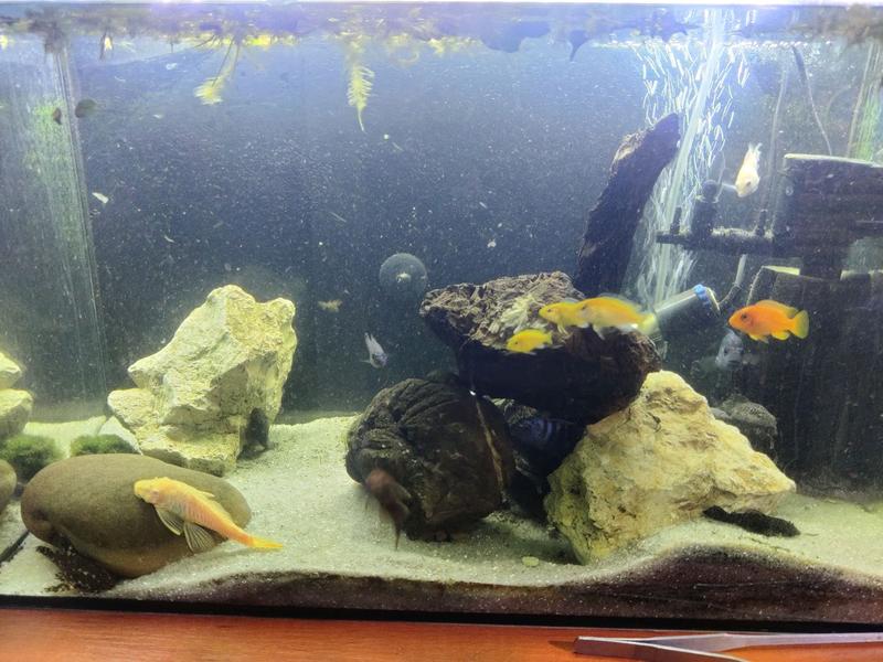 Продам рыб и аквариум