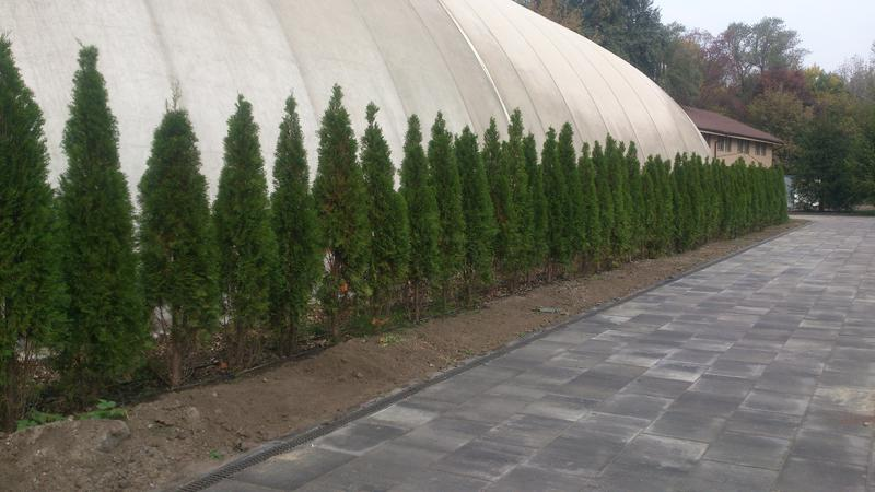 Озеленение участка в Киеве и области. - Фото 3