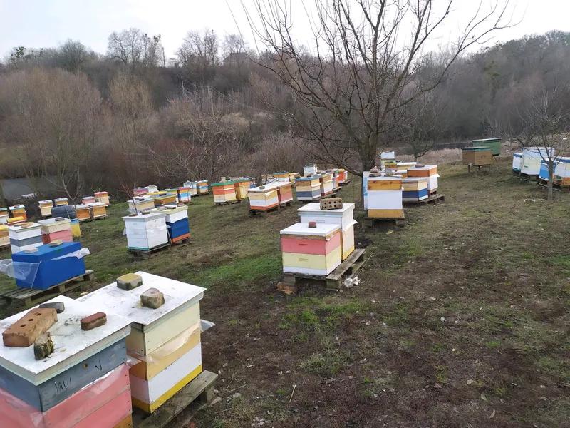 Пчеломатки карника Кройз - Фото 3