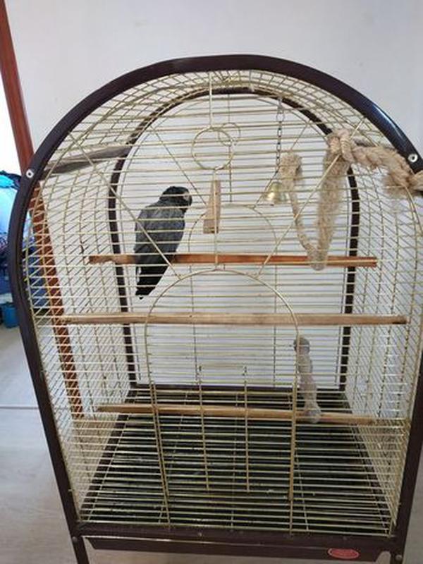 Попугай Жако - Фото 7