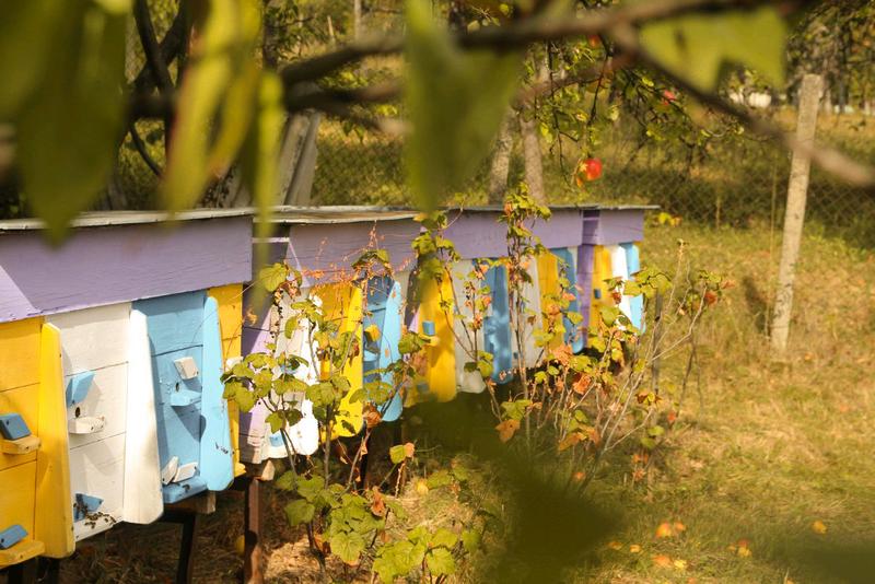 Натуральний закарпатський мед - Фото 9