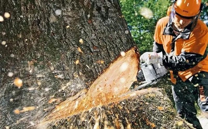 Удаление деревьев, обрезка деревьев, спил дерева в Черкасской обл на IZI.ua  (2551924)