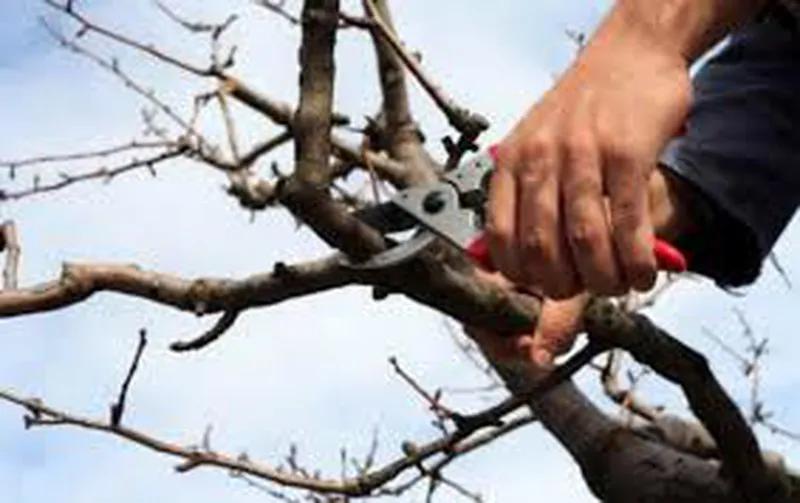 Обрезка сада. Обрезка деревьев. Услуги садовника. Уход за газоном - Фото 3