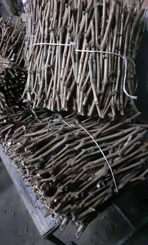 Черенки винограда столовых сортов. - Фото 2