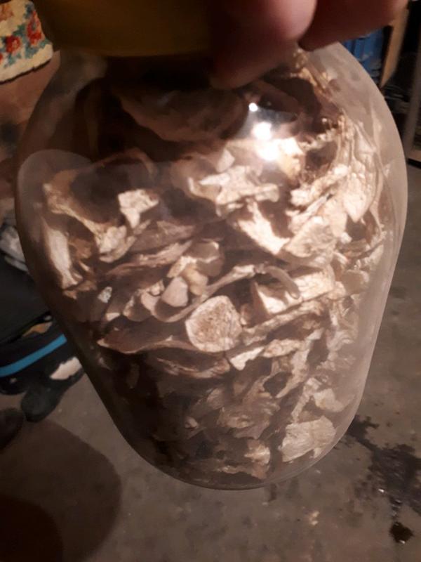 Сухи гриб - Фото 2