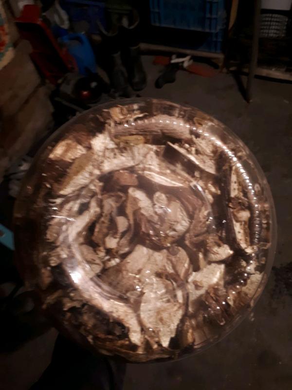 Сухи гриб - Фото 3