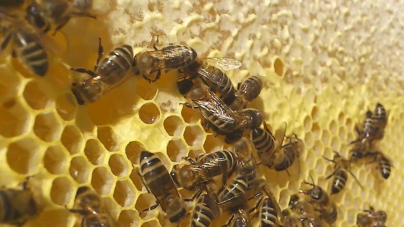 Мед домашній натуральний з власної пасіки 2019 / Мёд домашний 1 л - Фото 3