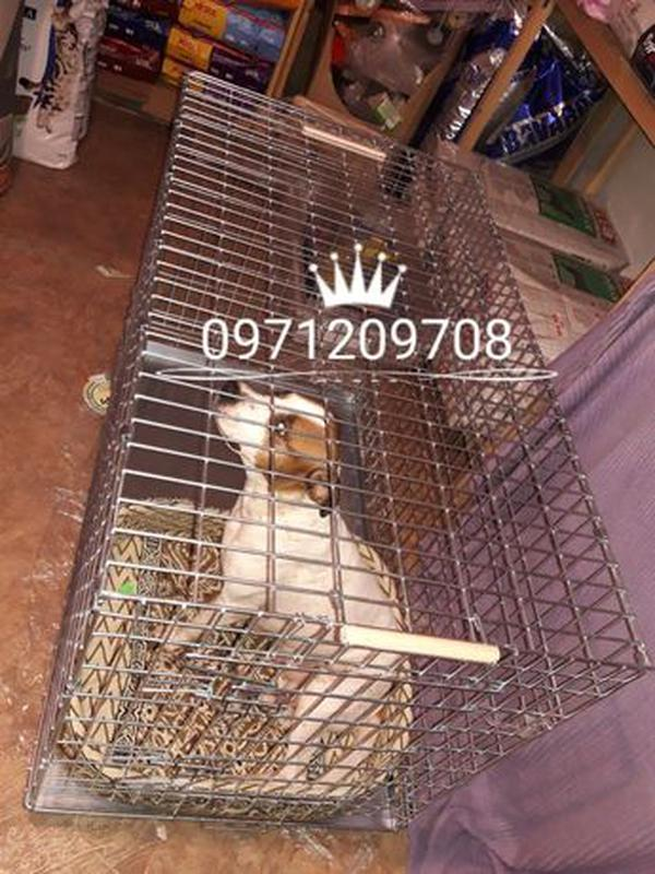 """Клетка для Собак (котов) """"Волк 2""""( вольер, лори) - Фото 4"""