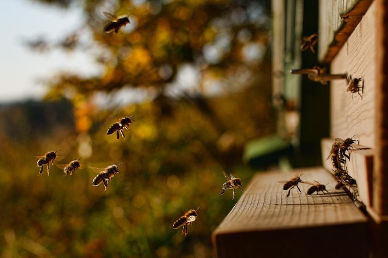Лесной мед - Фото 3