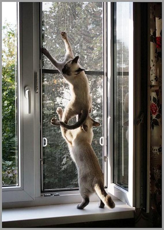 Москитная сетка для защиты от выпадения с окон домашних животных - Фото 2