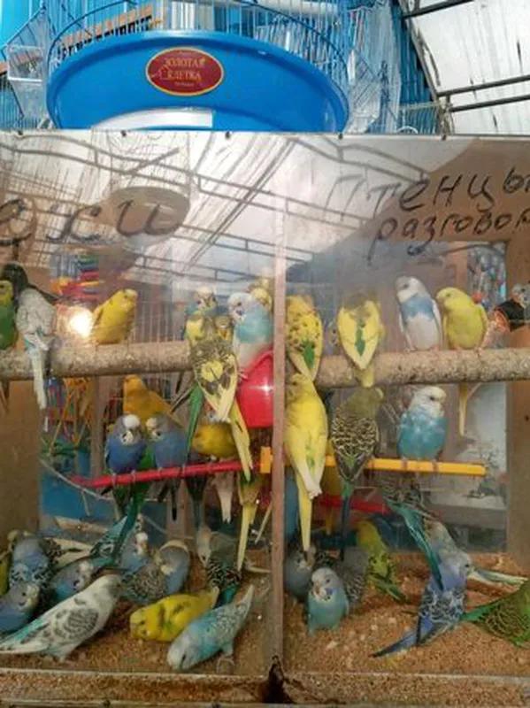 Птицы опт и розница клетки и корма для всех птиц