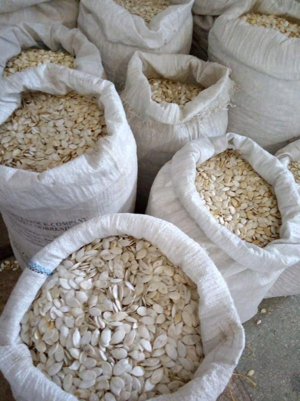 Семена тыквы белоголовка от 5 кг - Фото 6