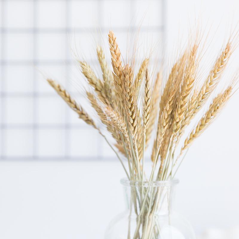 Колосья пшеницы сухоцветы декор свадебный букет пшеница безостая