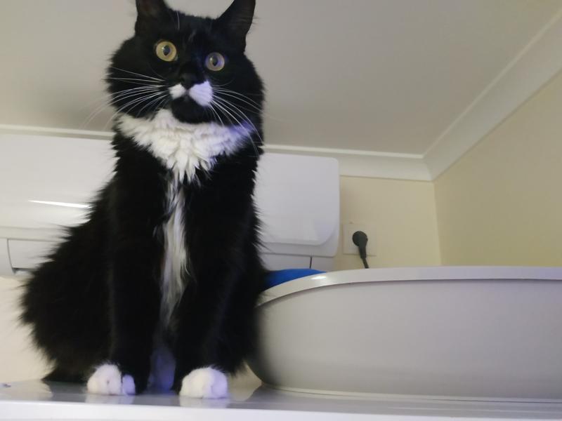 Передержка для котов -круглосуточно на связи