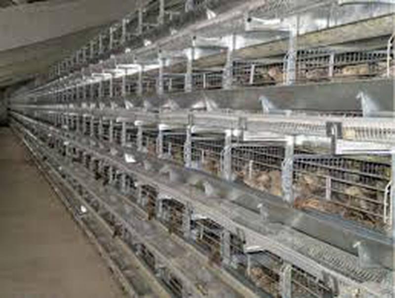 Виготовляємо продаєм клітинне устаткування для вирощування курей