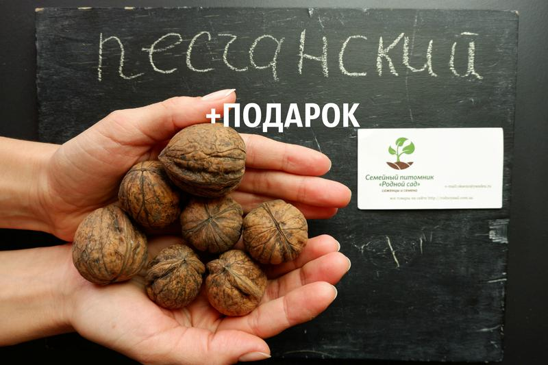 """Орех грецкий """"Песчанский"""" семена 20 шт для саженцев насіння горіх"""
