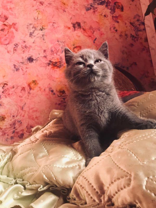 Котёнок ❤️