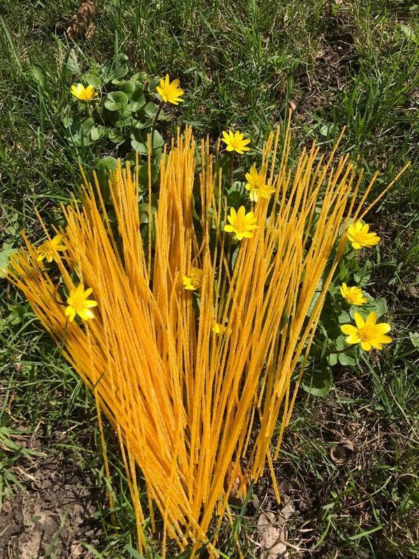 ЗОЖ ПП НОВИНКА. Кукурузные безглютеновые макароны паста спагетти - Фото 2