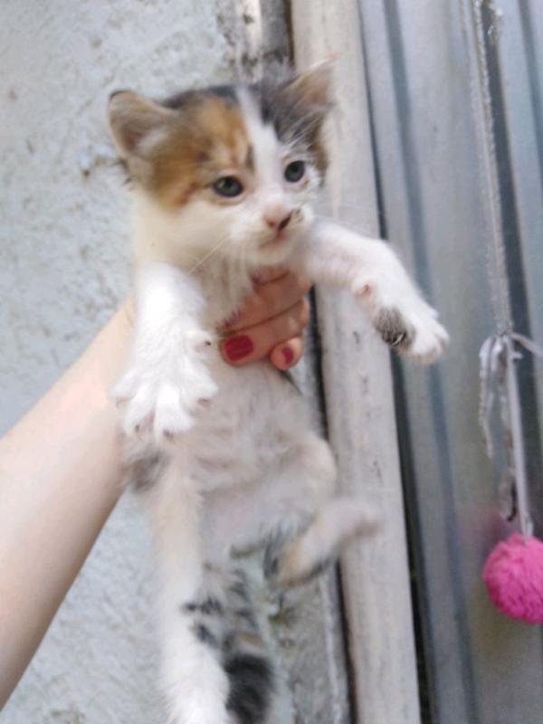 Котенок, Мармеладка