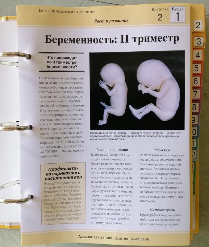 Домашняя медицинская энциклопедия - Фото 5