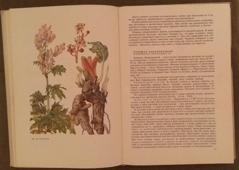 "Книга  редкая """"ЛЕЧЕНИЕ  РАСТЕНИЯМИ"" КОВАЛЕВА  Н.Г. 1972год. - Фото 6"