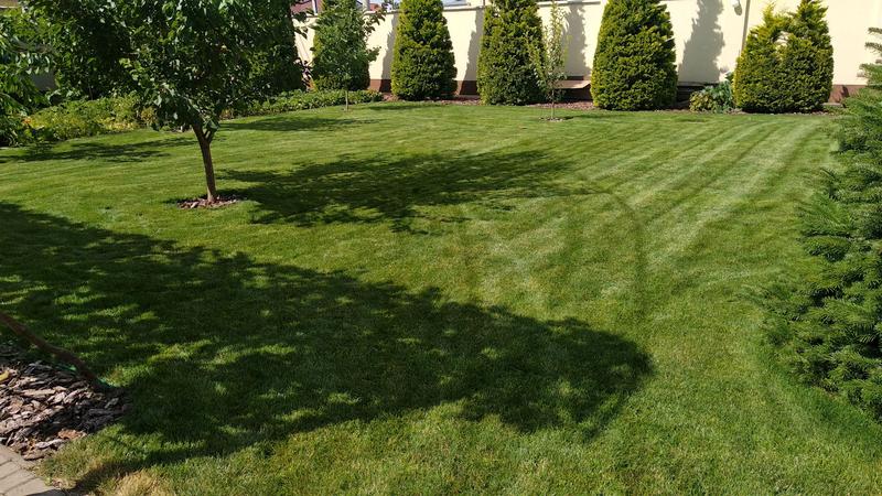 Газон сеянный , газон рулонный . Озеленение. Посев газона.