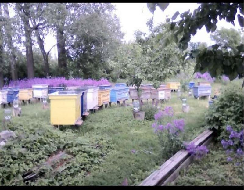Мёд натуральный цветочный 2020г - Фото 2