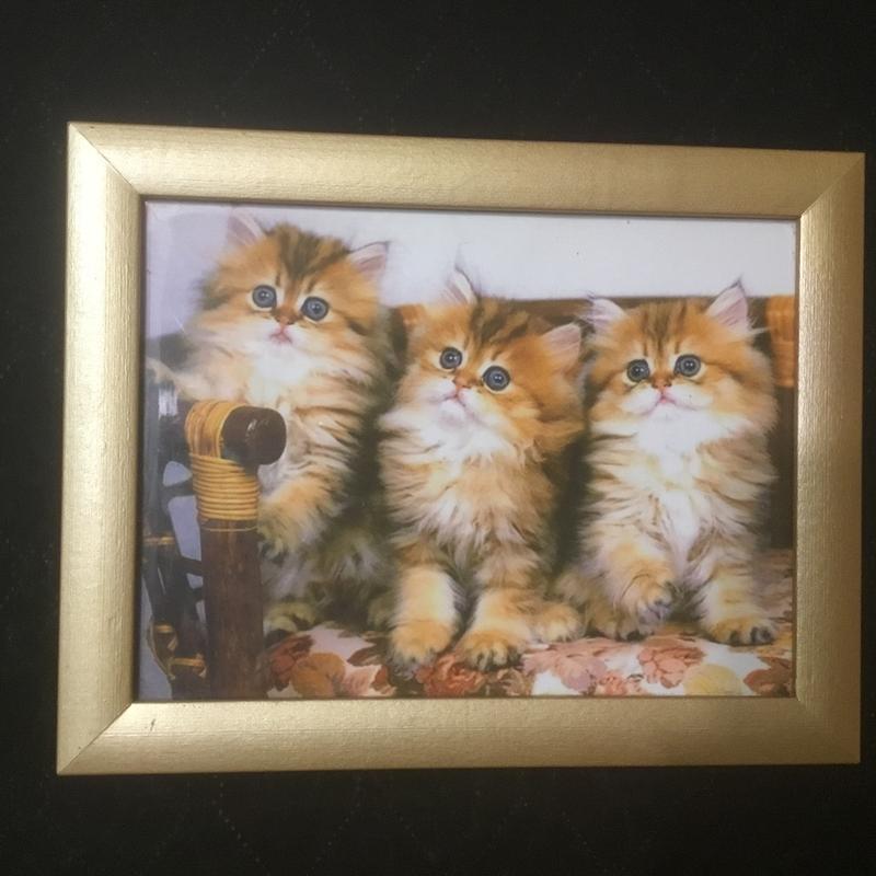 Красивая фото картина картинка «котики»