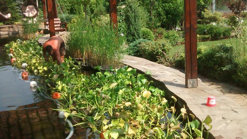 Художественное садоводство
