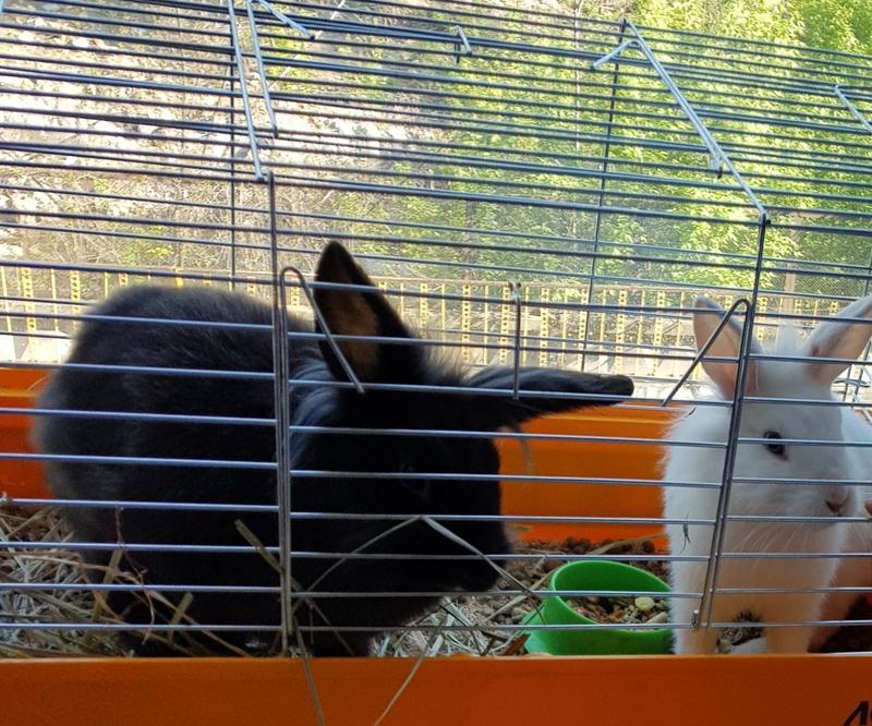 Передержка кроликов и грызунов