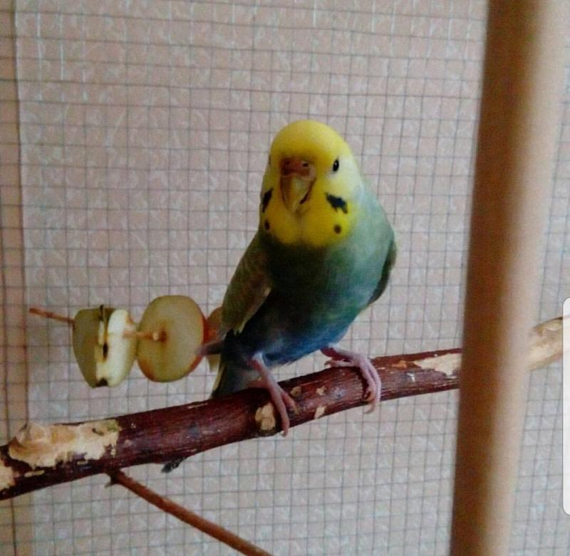 Передержка попугаев, птиц - Фото 2