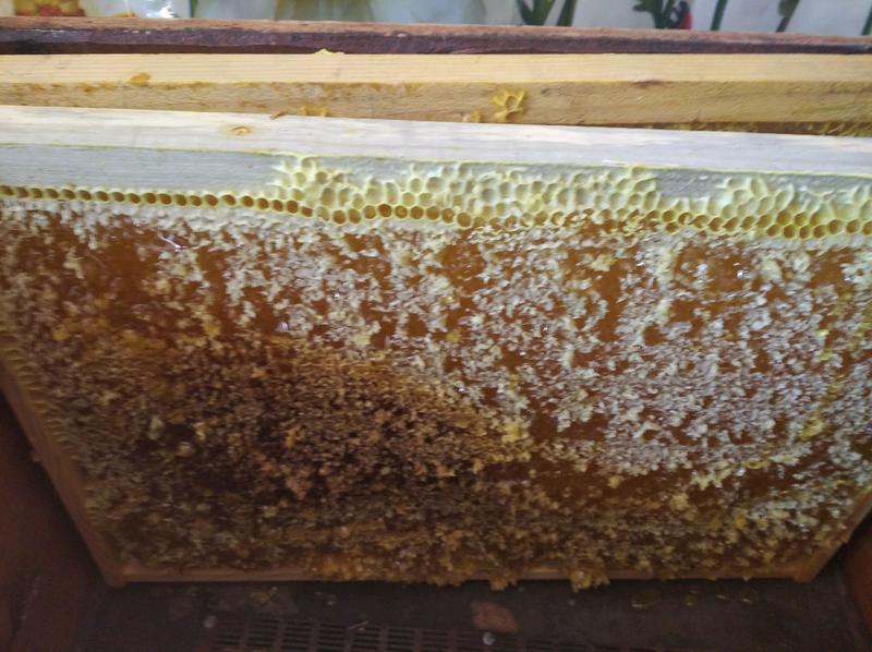Мед з золотарника - Фото 3