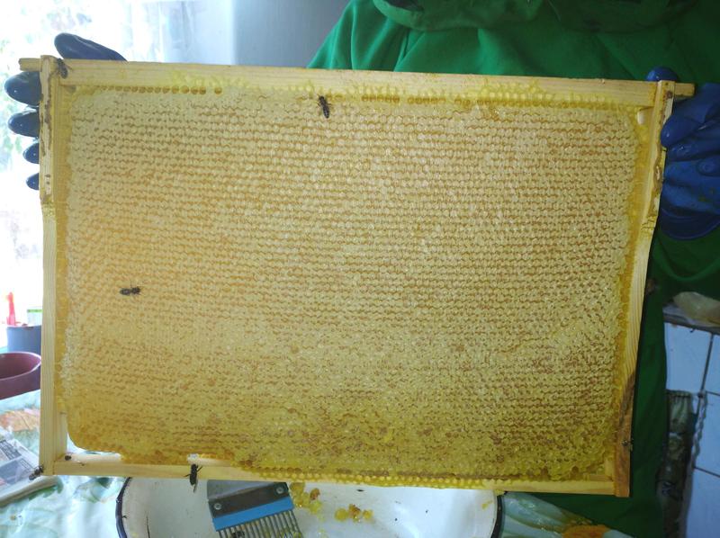 Мед з золотарника - Фото 4