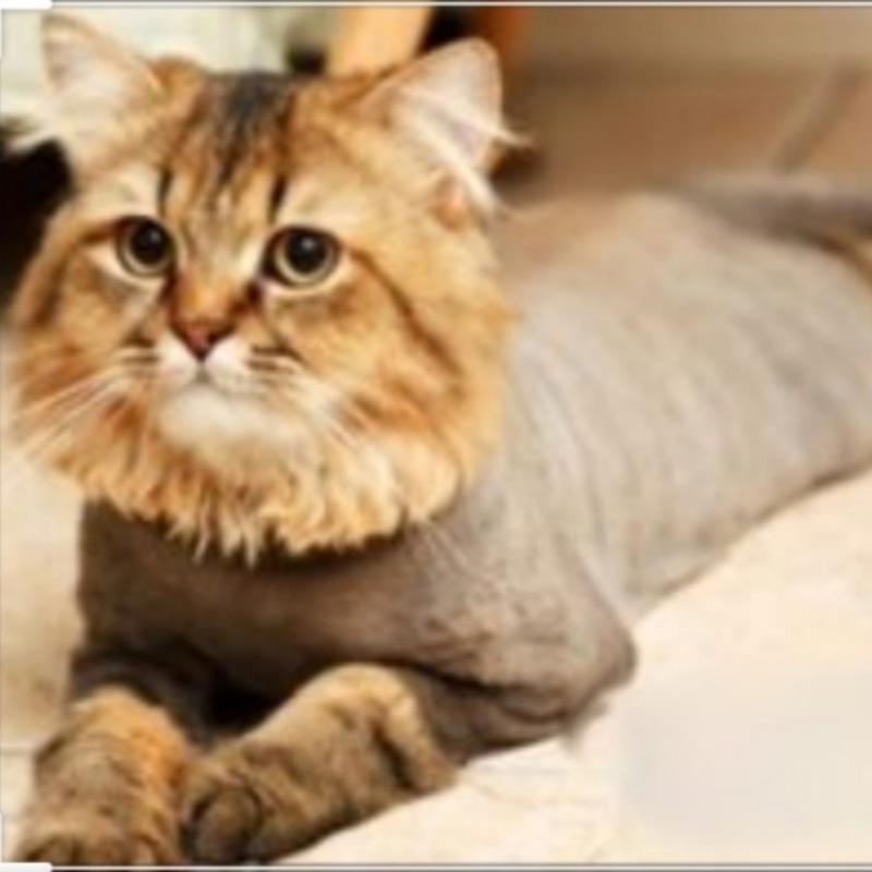 Стрижка котов с выездом на дом.