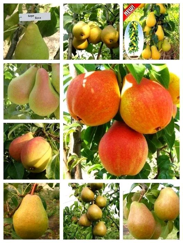 Сухофрукти, груші, яблука, вишня, кізіл, слива, абрикос, соки