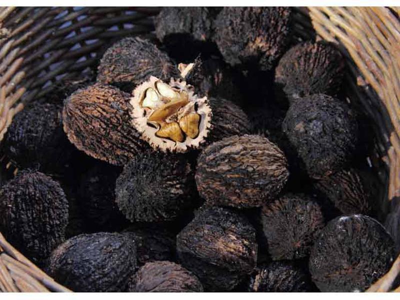 Черный орех / Чорний горіх / Плоды на посадку и настойку - Фото 2
