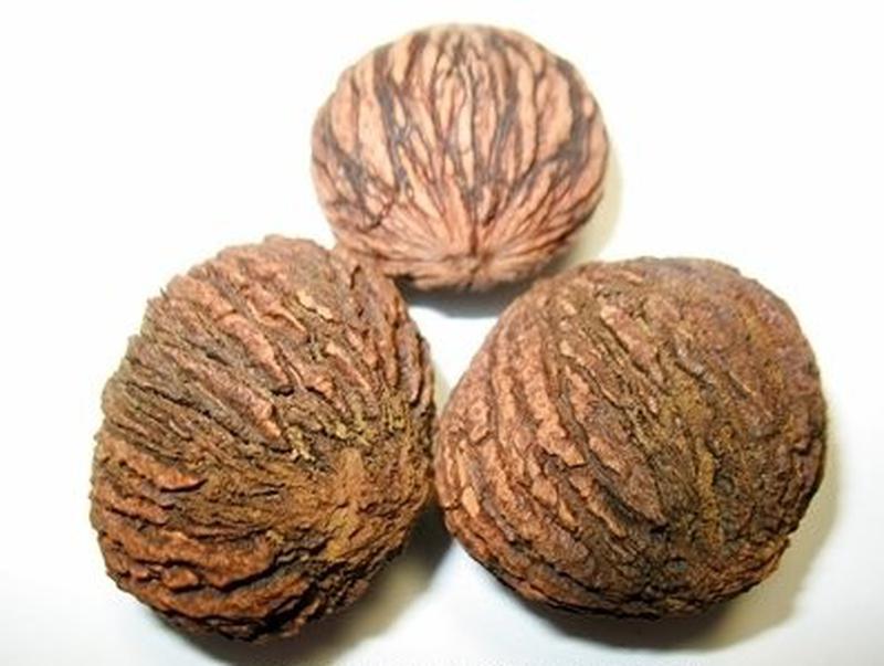 Черный орех / Чорний горіх / Плоды на посадку и настойку - Фото 3