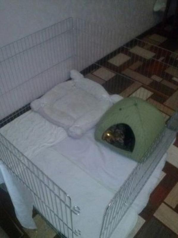 Ясли вольер манеж 100х100х60h клетка для собак кошек щенков котят - Фото 4