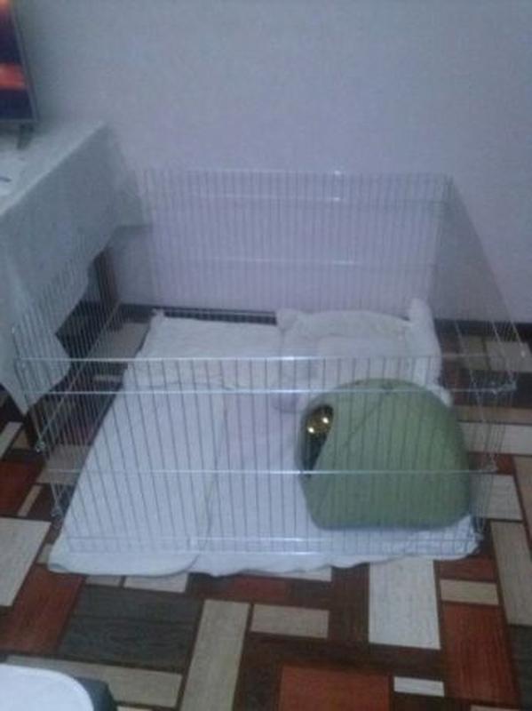 Ясли вольер манеж 100х100х60h клетка для собак кошек щенков котят - Фото 5