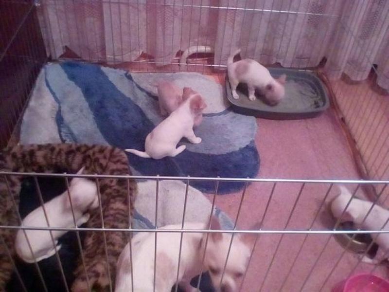 Ясли вольер манеж 100х100х60h клетка для собак кошек щенков котят - Фото 6