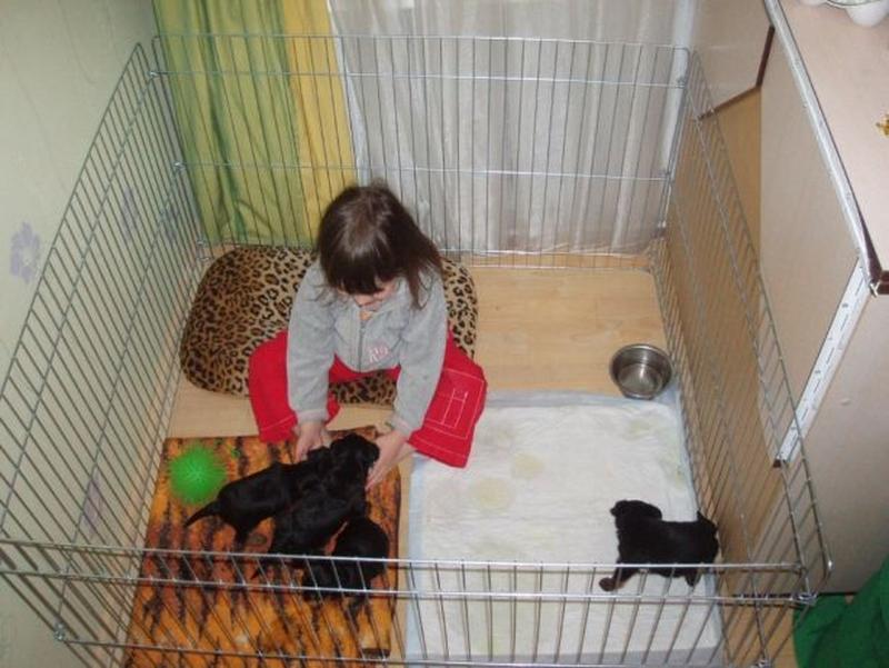 Ясли вольер манеж 100х100х60h клетка для собак кошек щенков котят - Фото 7