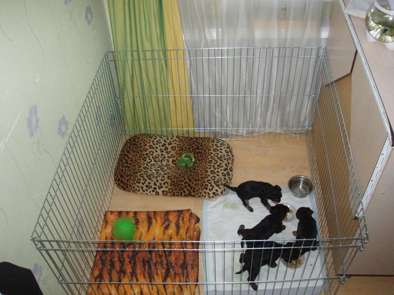 Ясли вольер манеж 100х100х60h клетка для собак кошек щенков котят - Фото 8