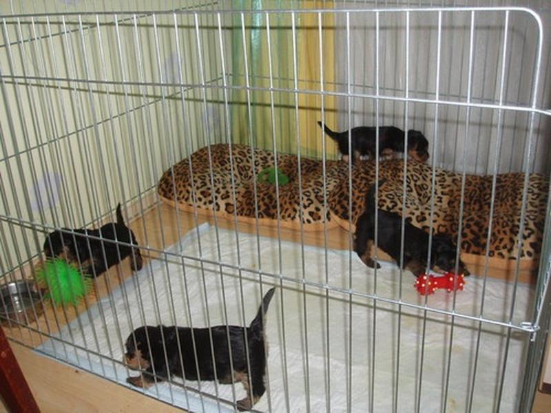 Ясли вольер манеж 100х100х60h клетка для собак кошек щенков котят - Фото 9