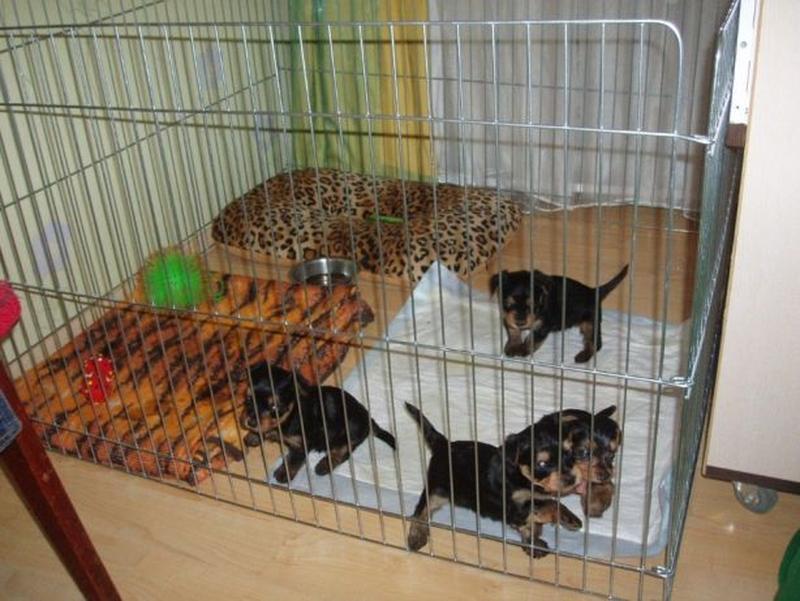 Ясли вольер манеж 100х100х60h клетка для собак кошек щенков котят - Фото 10