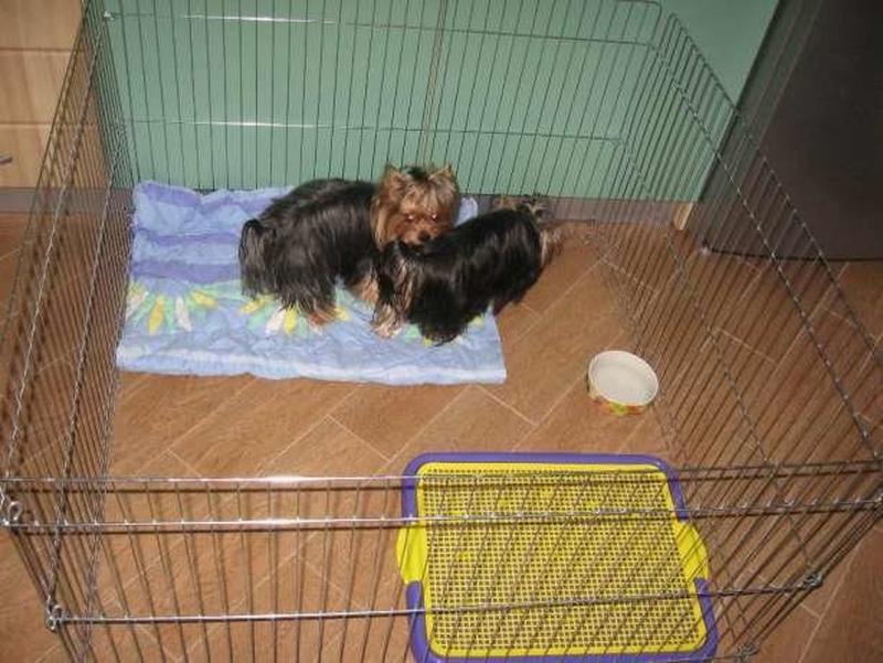 Ясли вольер манеж 100х100х60h клетка для собак кошек щенков котят - Фото 3
