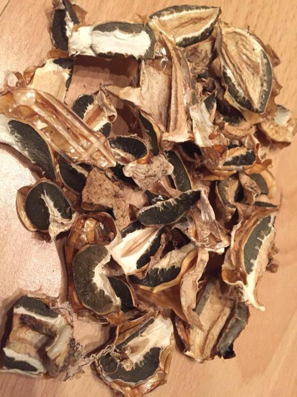 Гриб веселка, грибы веселки