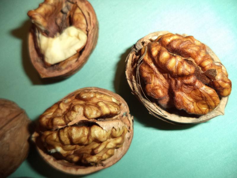 Саженцы грецкого ореха - Фото 2