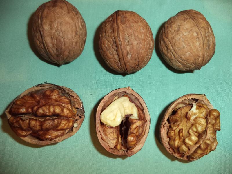 Саженцы грецкого ореха - Фото 3