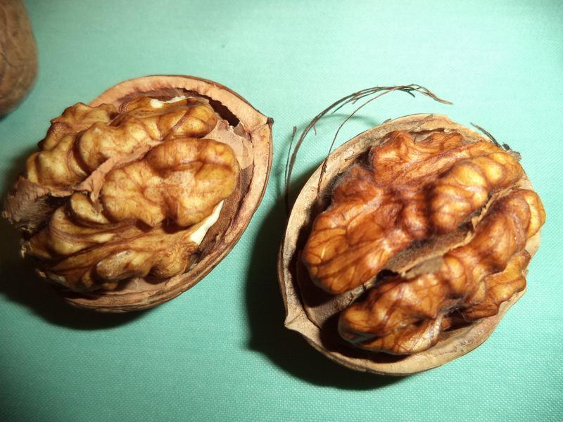 Саженцы грецкого ореха - Фото 4