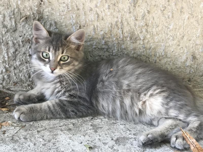 Котёнок девочка 3 месяца